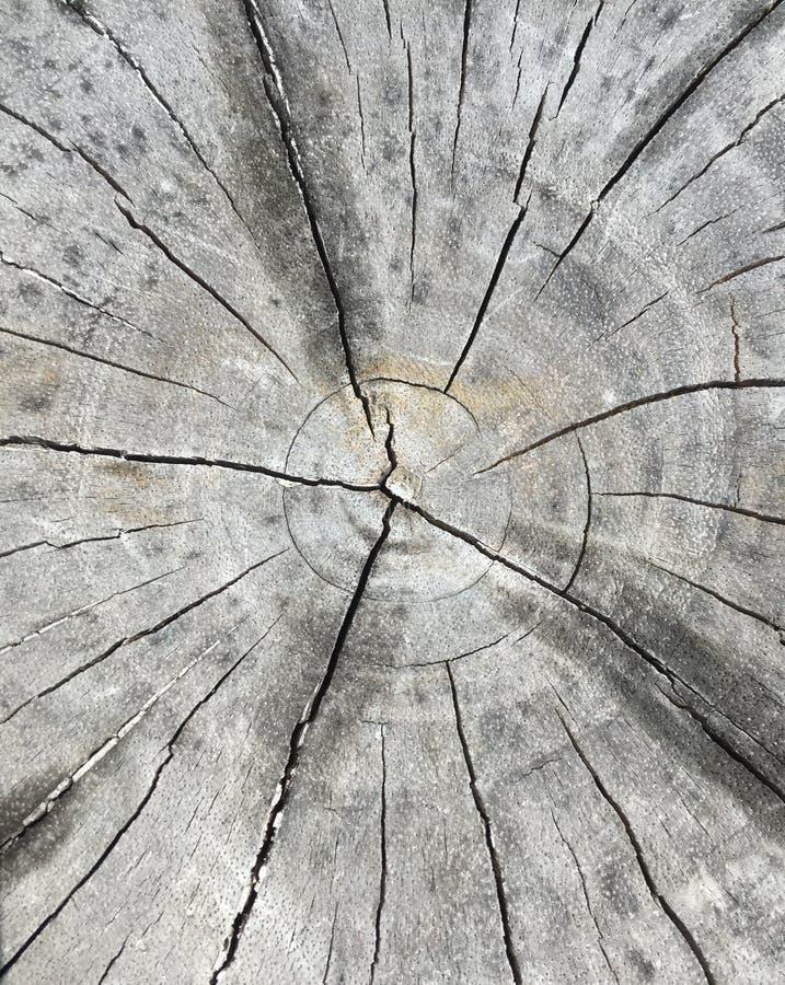 Ομαλή επιφάνεια ενός φλοιού στοκ φωτογραφίες