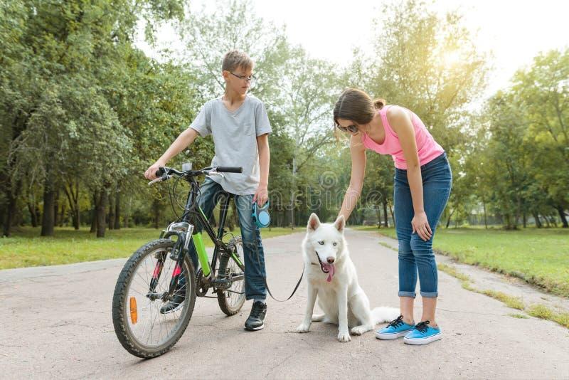 Ομιλία εφήβων παιδιών, που περπατά το σκυλί στο πάρκο στο ποδήλατο στοκ εικόνες