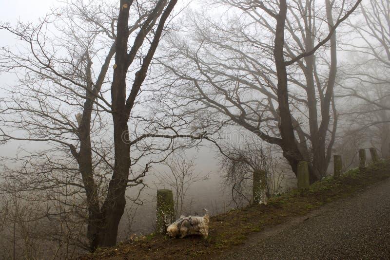 Ομιχλώδεις δρόμος και δέντρα Τοπίο ξημερωμάτων, Γερμανία στοκ εικόνες