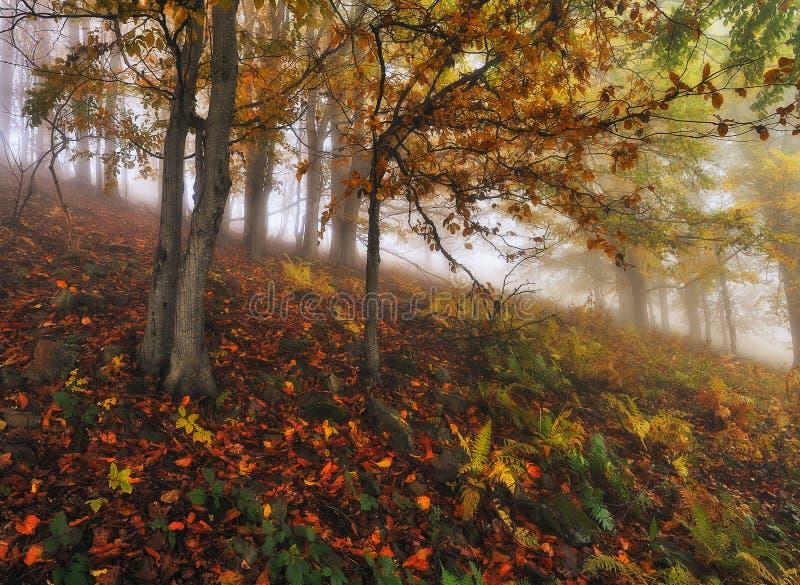 Ομιχλώδες δάσος νεράιδων φθινοπώρου δασικό στοκ φωτογραφίες με δικαίωμα ελεύθερης χρήσης
