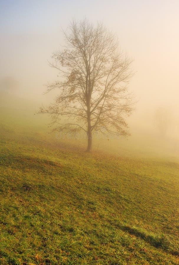 Ομιχλώδες δάσος νεράιδων φθινοπώρου δασικό στοκ φωτογραφία