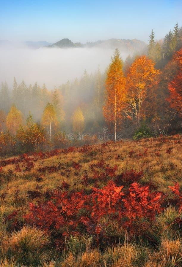 Ομιχλώδες δάσος νεράιδων φθινοπώρου δασικό στοκ εικόνες