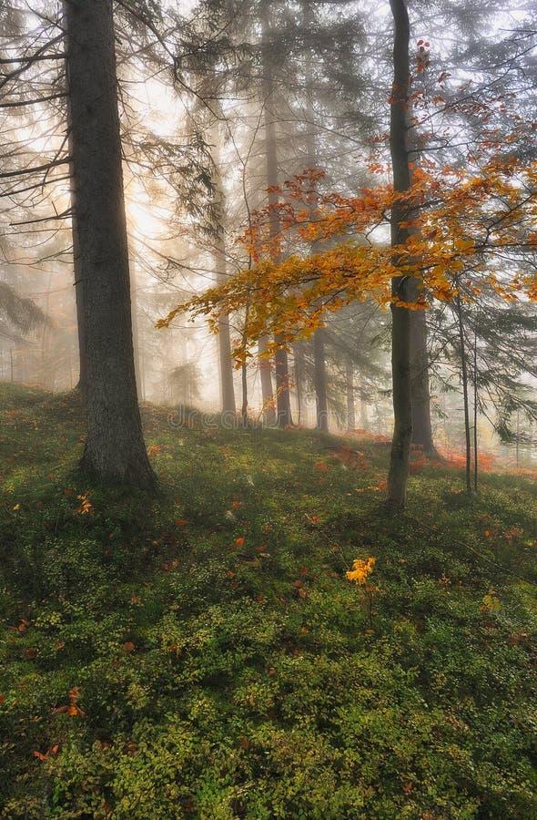 Ομιχλώδες δάσος νεράιδων φθινοπώρου δασικό στοκ εικόνα