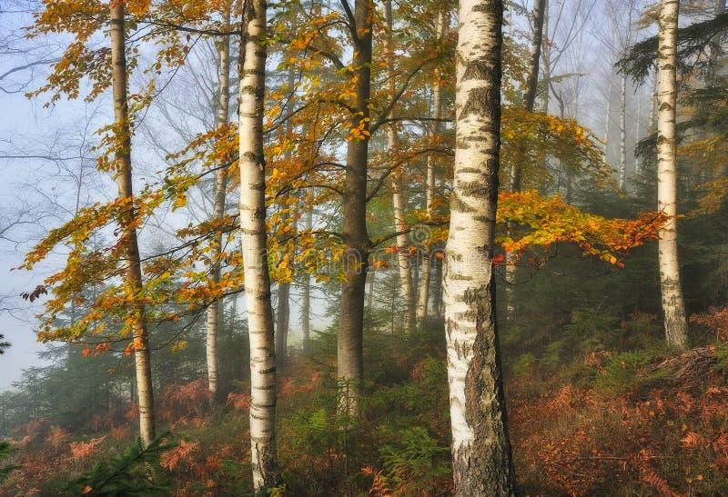 Ομιχλώδες δάσος νεράιδων φθινοπώρου δασικό στοκ εικόνα με δικαίωμα ελεύθερης χρήσης