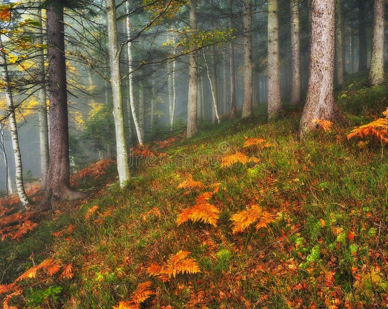 Ομιχλώδες δάσος νεράιδων φθινοπώρου δασικό στοκ φωτογραφία με δικαίωμα ελεύθερης χρήσης