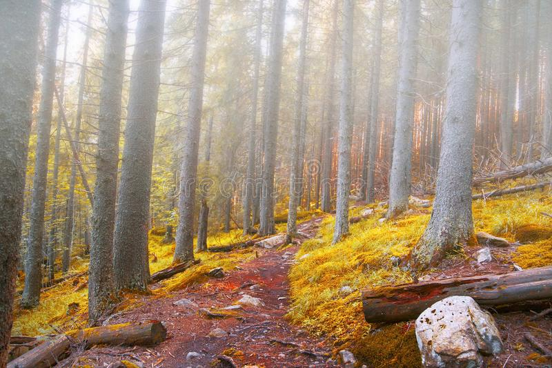 Ομιχλώδες δάσος φθινοπώρου με το δρόμο στοκ εικόνες