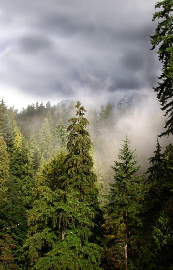 Download ομιχλώδες δάσος στοκ εικόνες. εικόνα από θύελλα, δάση, ομιχλώδης - 116740