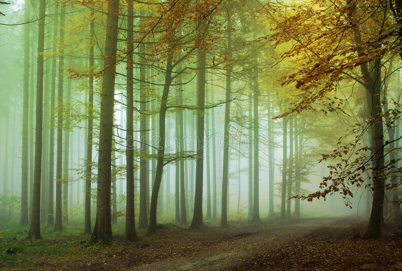 Ομιχλώδες δάσος στοκ εικόνες