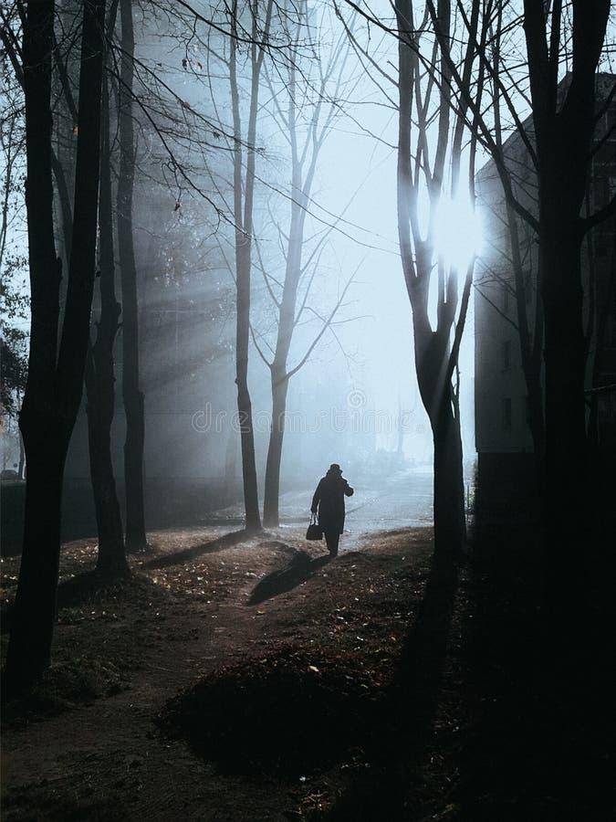 ομιχλώδες πρωί φθινοπώρου στοκ εικόνες
