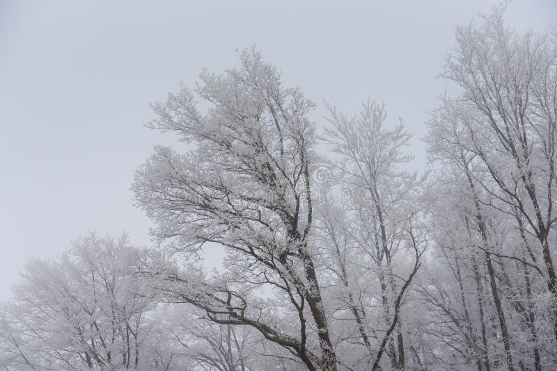 ομιχλώδες χειμερινό τοπίο - παγωμένα δέντρα στο χιονώδες δάσος στοκ φωτογραφίες με δικαίωμα ελεύθερης χρήσης