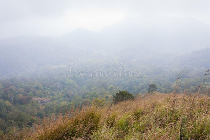 Ομιχλώδης ανατολή στο εθνικό πάρκο Periyar, Thekkady, Κεράλα, Ινδία στοκ φωτογραφία με δικαίωμα ελεύθερης χρήσης