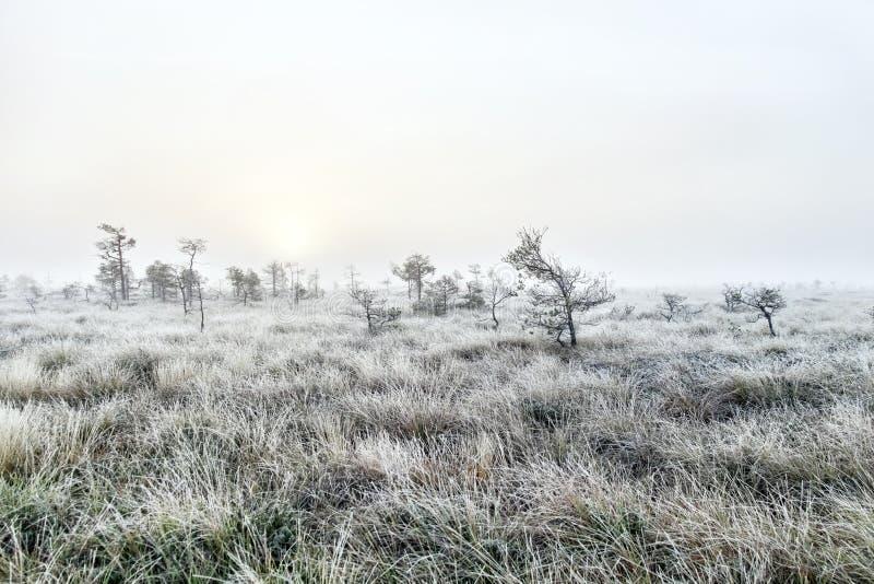 Ομιχλώδης αυγή στο έλος στοκ φωτογραφίες με δικαίωμα ελεύθερης χρήσης