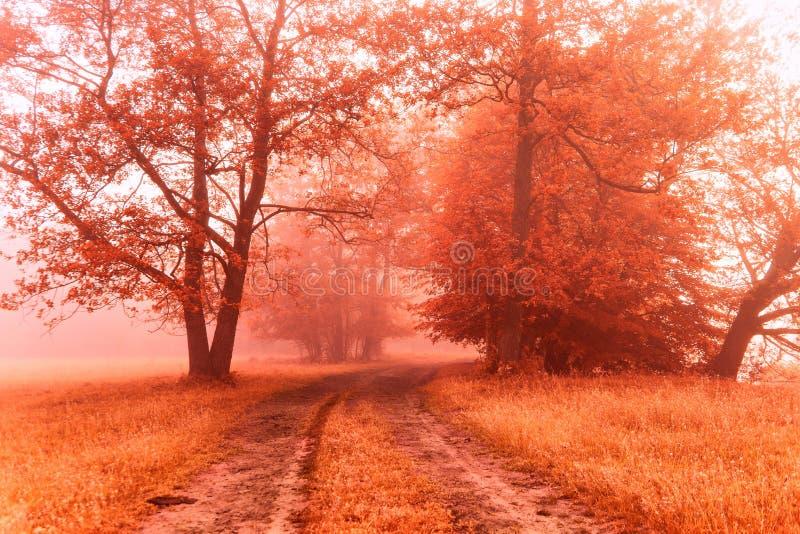 Ομιχλώδης βρώμικος δρόμος φθινοπώρου Ανατολή χρωμάτων πτώσης στοκ εικόνες