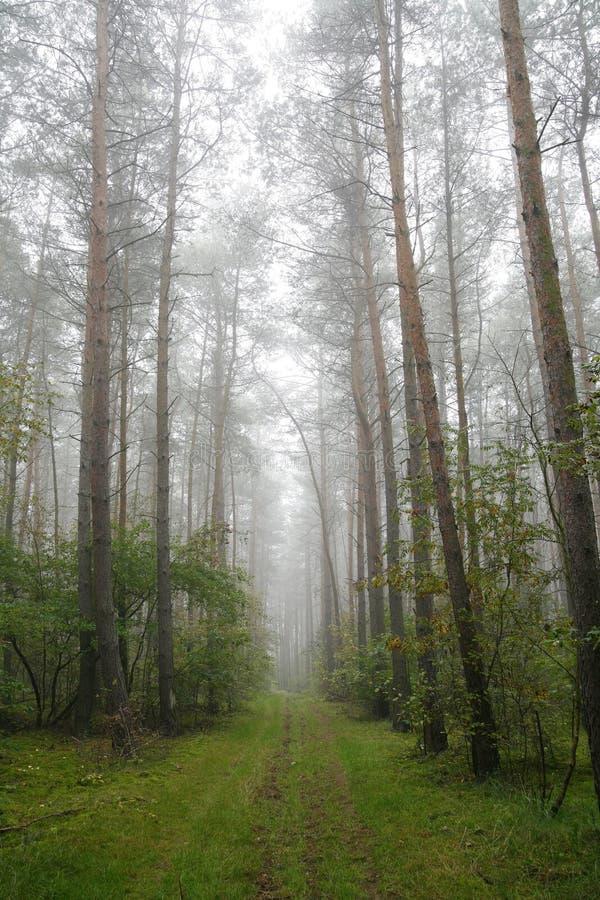 ομιχλώδης δασική Πολωνία στοκ φωτογραφίες με δικαίωμα ελεύθερης χρήσης