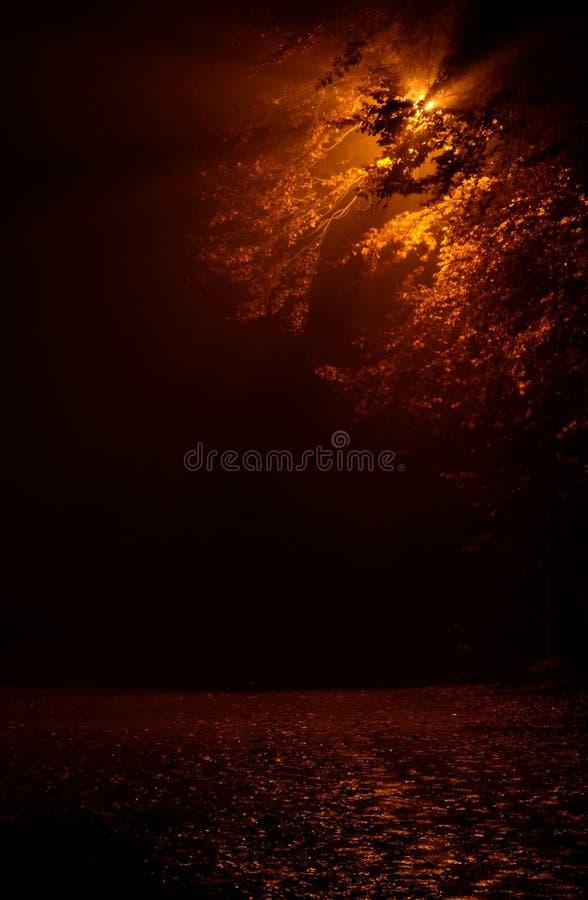 ομιχλώδης οδός νύχτας στοκ φωτογραφίες