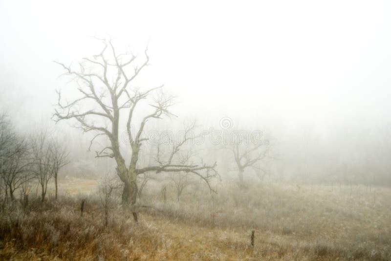 ομιχλώδης χειμώνας τοπίων στοκ φωτογραφία με δικαίωμα ελεύθερης χρήσης