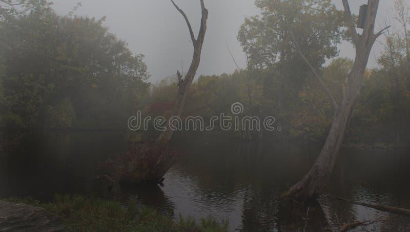 ομιχλώδη δέντρα στοκ φωτογραφία