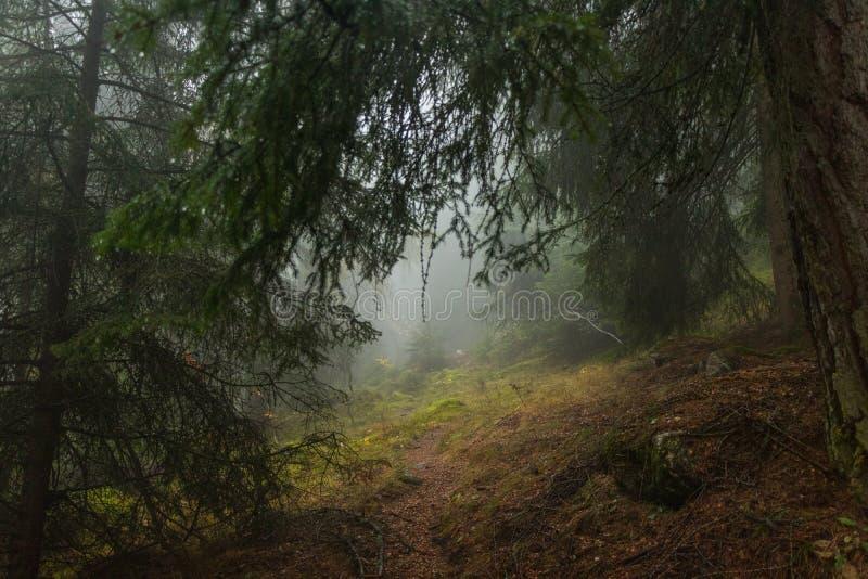 Ομιχλώδη κρύα βουνά στοκ εικόνες