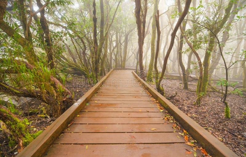 Ομιχλώδες δάσος laurisilva στα βουνά Anaga, Tenerife, Κανάριο νησί, Ισπανία στοκ φωτογραφίες με δικαίωμα ελεύθερης χρήσης