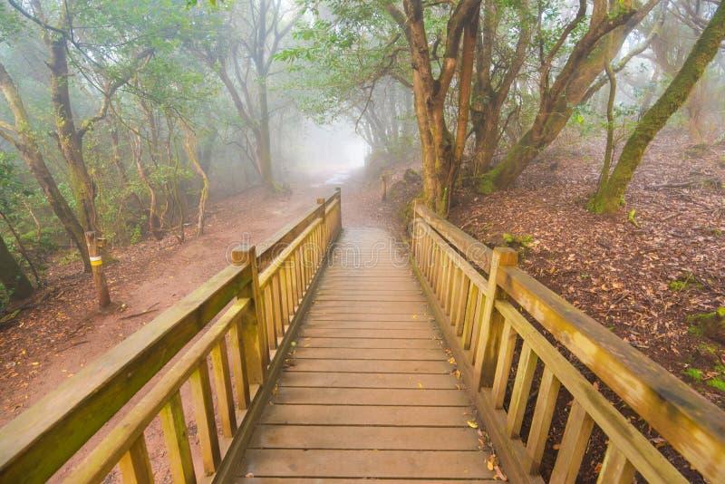 Ομιχλώδες δάσος laurisilva στα βουνά Anaga, Tenerife, Κανάριο νησί, Ισπανία στοκ εικόνες
