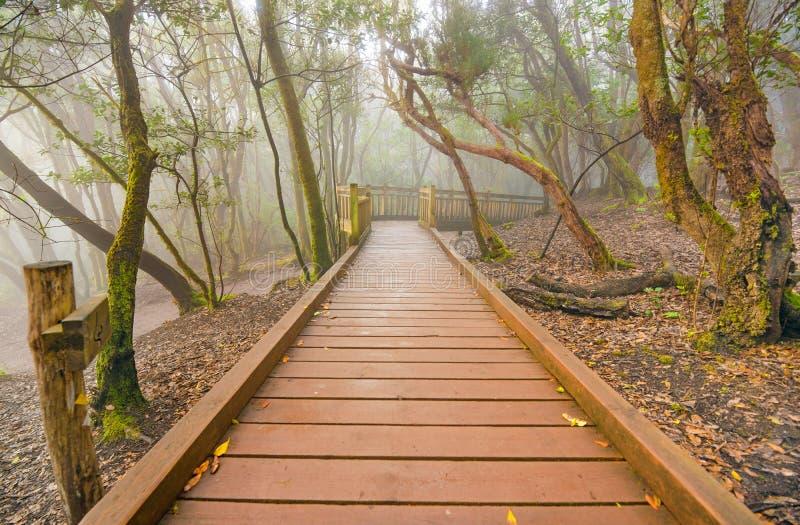 Ομιχλώδες δάσος laurisilva στα βουνά Anaga, Tenerife, Κανάριο νησί, Ισπανία στοκ φωτογραφία με δικαίωμα ελεύθερης χρήσης