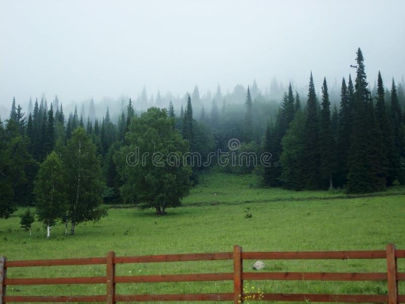 Ομιχλώδες θερινό πρωί στο ορεινό χωριό στοκ εικόνες