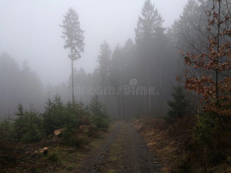 ομιχλώδες μονοπάτι στοκ φωτογραφία με δικαίωμα ελεύθερης χρήσης