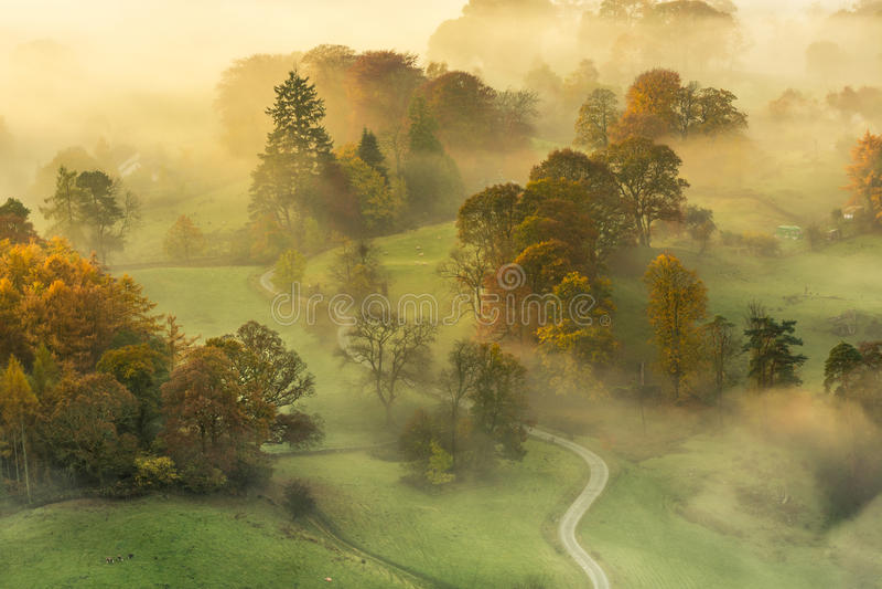 Ομιχλώδες πρωί φθινοπώρου με τα όμορφα δονούμενα θερμά χρώματα στοκ εικόνες με δικαίωμα ελεύθερης χρήσης