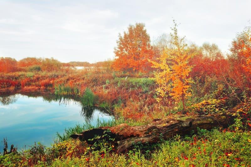 Ομιχλώδες τοπίο φθινοπώρου στα μαλακά εκλεκτής ποιότητας χρώματα - μπλε ποταμός που εισβάλλεται με τους καλάμους στον ομιχλώδη κα στοκ φωτογραφία με δικαίωμα ελεύθερης χρήσης