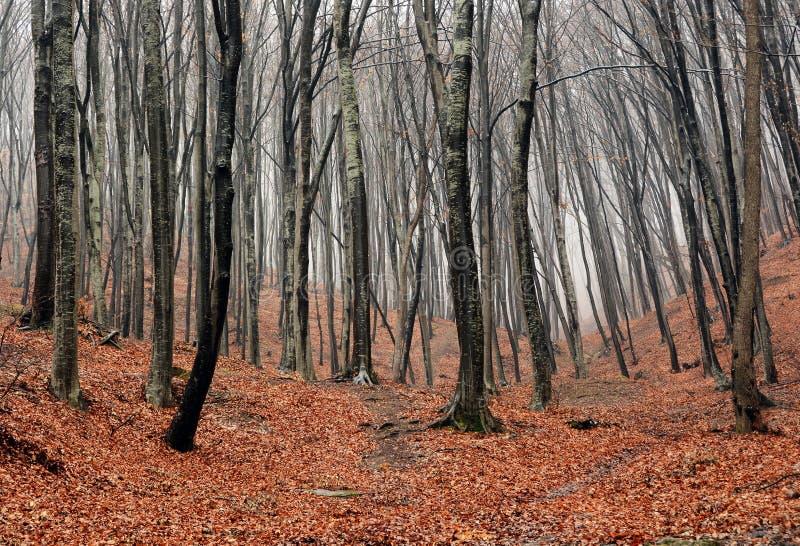 Ομιχλώδες φθινόπωρο Forrest στοκ εικόνα με δικαίωμα ελεύθερης χρήσης