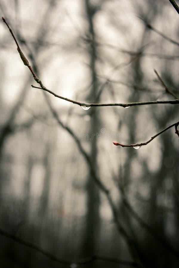 Ομιχλώδης δροσιά στοκ φωτογραφίες