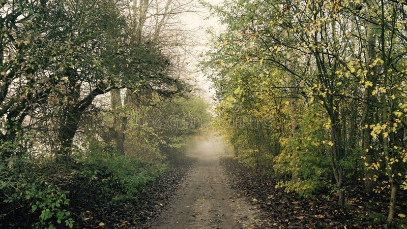 ομιχλώδης δρόμος στοκ φωτογραφία με δικαίωμα ελεύθερης χρήσης