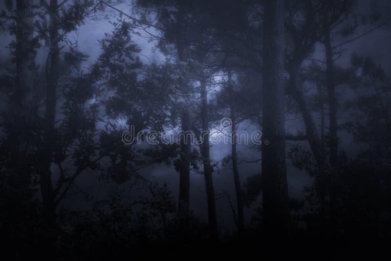 Ομιχλώδη και σκοτεινά wooids στοκ φωτογραφία