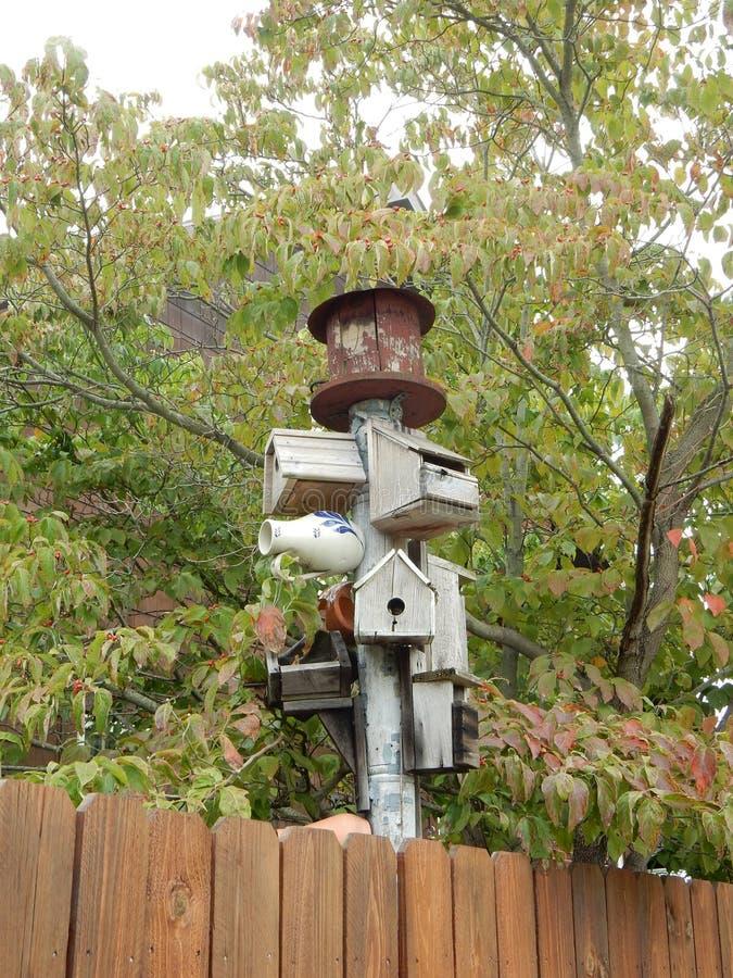 Ομιχλώδη σπίτια πουλιών ημέρας στοκ εικόνα