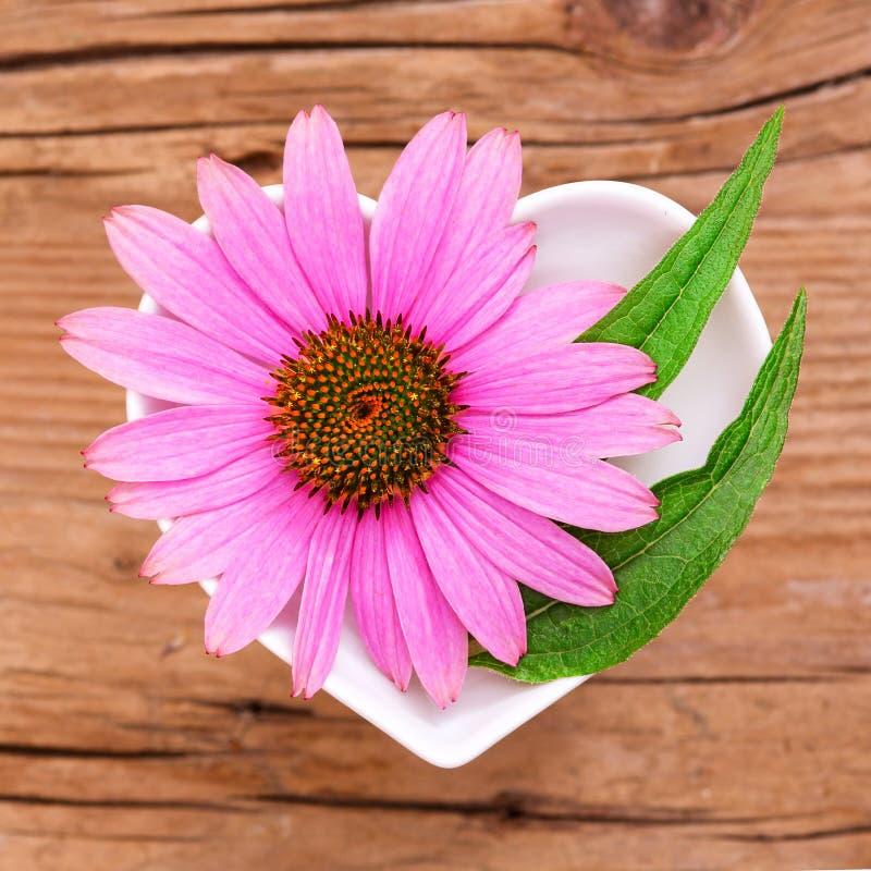 Ομοιοπαθητική και μαγείρεμα με το echinacea στοκ φωτογραφίες