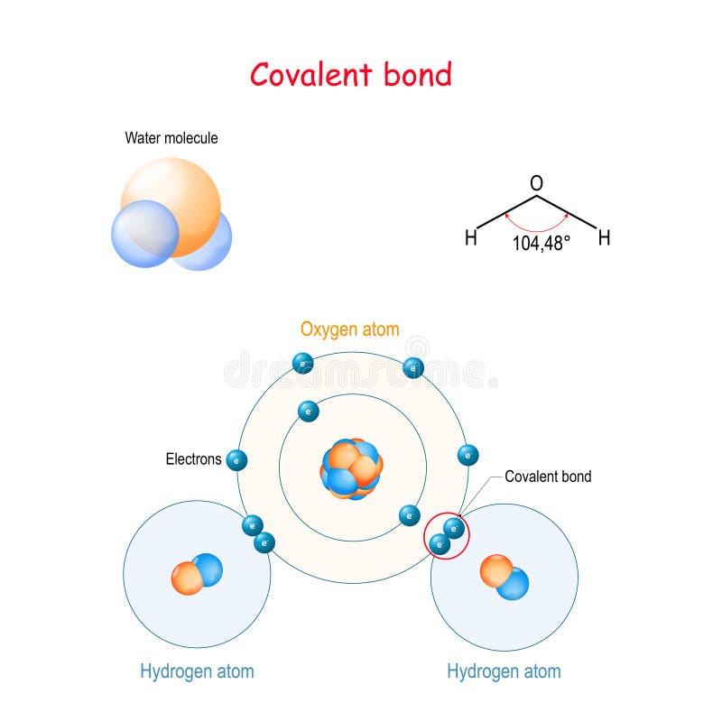 Ομοιοπολικό μόριο νερού δεσμών παραδείγματος χάριν H2O διανυσματική απεικόνιση