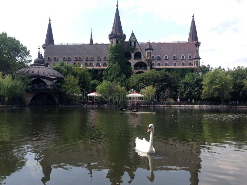 Ομορφιά λιμνών φύσης του Castle Κύκνος στοκ εικόνες