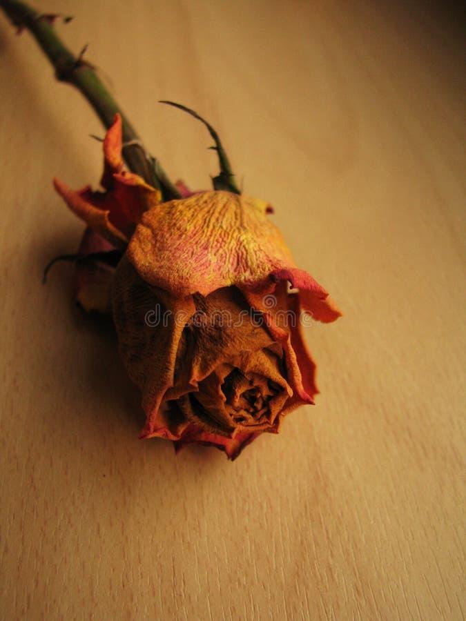 ομορφιά νεκρή στοκ εικόνες