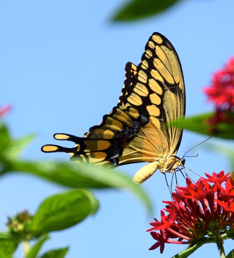 Ομορφιά πεταλούδων στοκ φωτογραφία με δικαίωμα ελεύθερης χρήσης