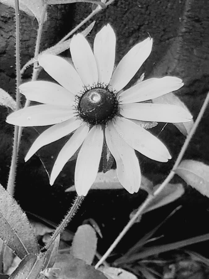 Ομορφιά στα μικρά πράγματα στοκ φωτογραφία με δικαίωμα ελεύθερης χρήσης