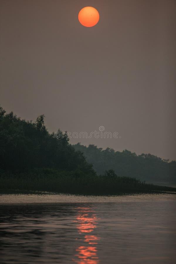 Ομορφιά της επιφύλαξης μαγγροβίων και τιγρών Sundarbans στοκ εικόνα με δικαίωμα ελεύθερης χρήσης