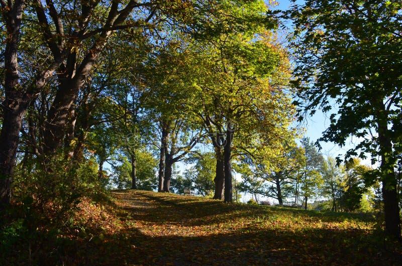 Ομορφιά της Νέας Αγγλίας ενός τραίνου φθινοπώρου με το φύλλωμα πτώσης στοκ εικόνες