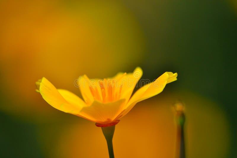 Ομορφιά της φύσης στοκ φωτογραφίες