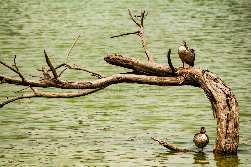 Ομορφιά της φύσης στοκ εικόνες