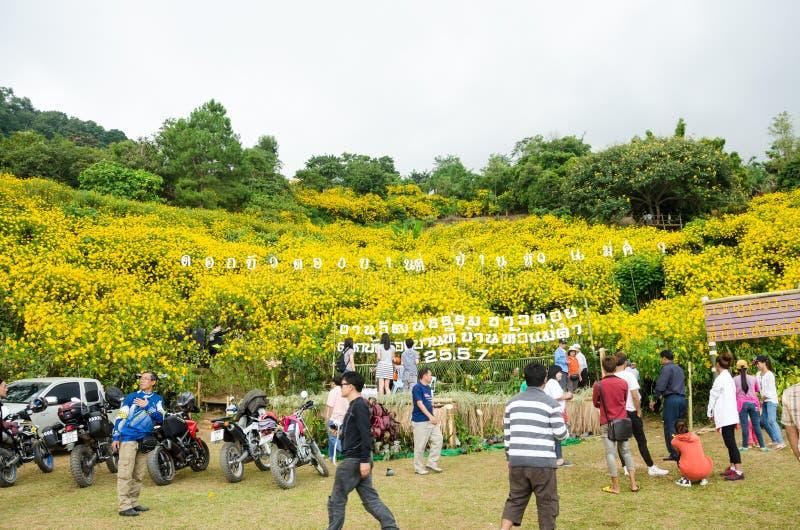 Ομορφιά του μεξικάνικου φεστιβάλ ηλίανθων σε Doi Hua Mae Kam στοκ φωτογραφία