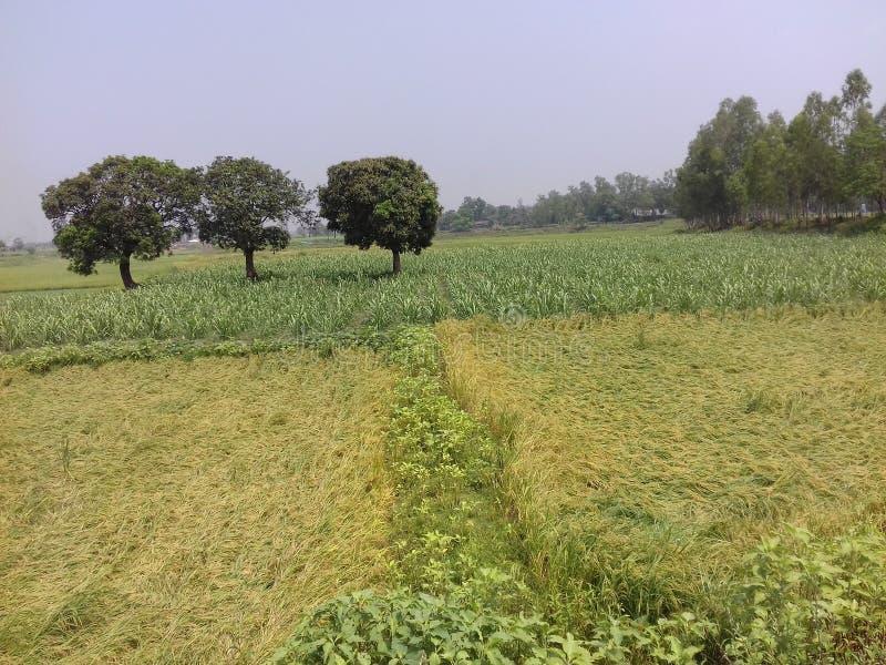 Ομορφιά του Μπανγκλαντές στοκ φωτογραφία με δικαίωμα ελεύθερης χρήσης