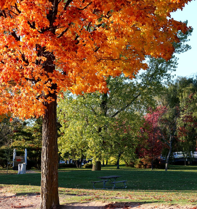 Ομορφιά του φθινοπώρου στοκ εικόνες