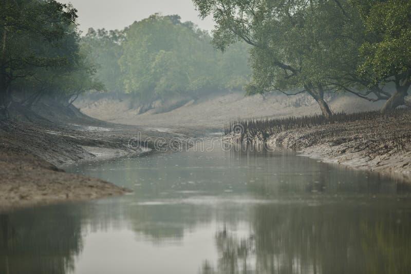 Ομορφιά των μαγγροβίων Sundarbans στην Ινδία στοκ εικόνα