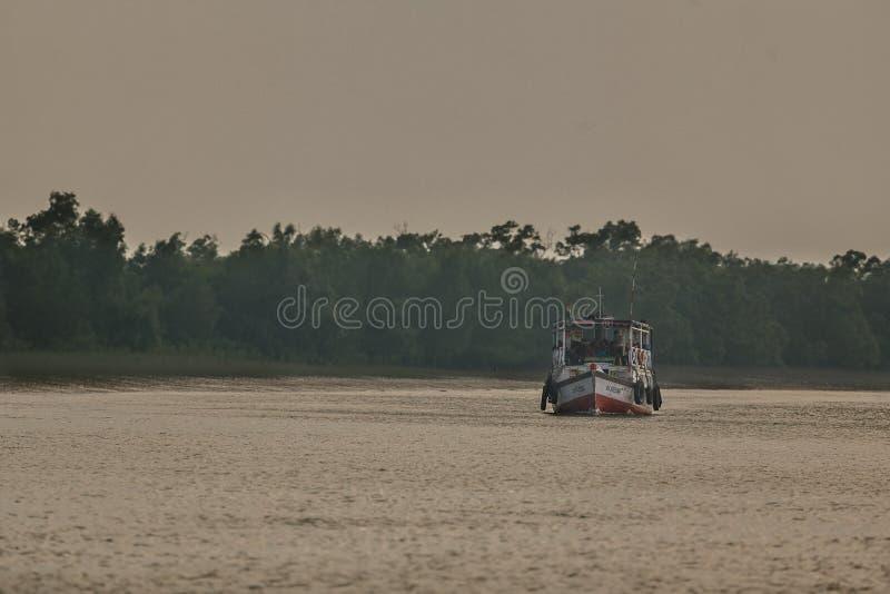 Ομορφιά των μαγγροβίων Sundarbans στην Ινδία στοκ φωτογραφίες