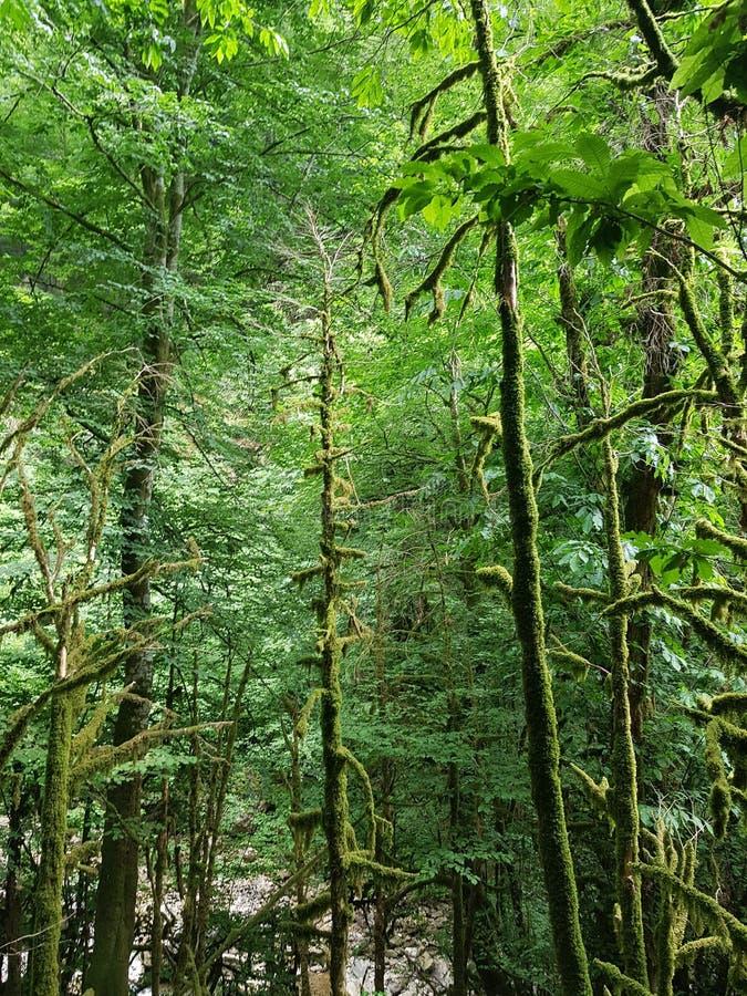 Ομορφιά Bewitching και μαγικός του ήρεμου δάσους πυξαριού στοκ εικόνα